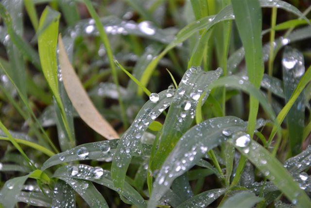 rain-3-5-tevel